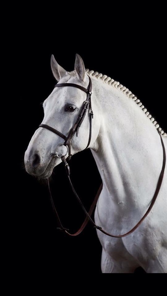 Phillipaerts' Carlotta 276 sold to Switzerland