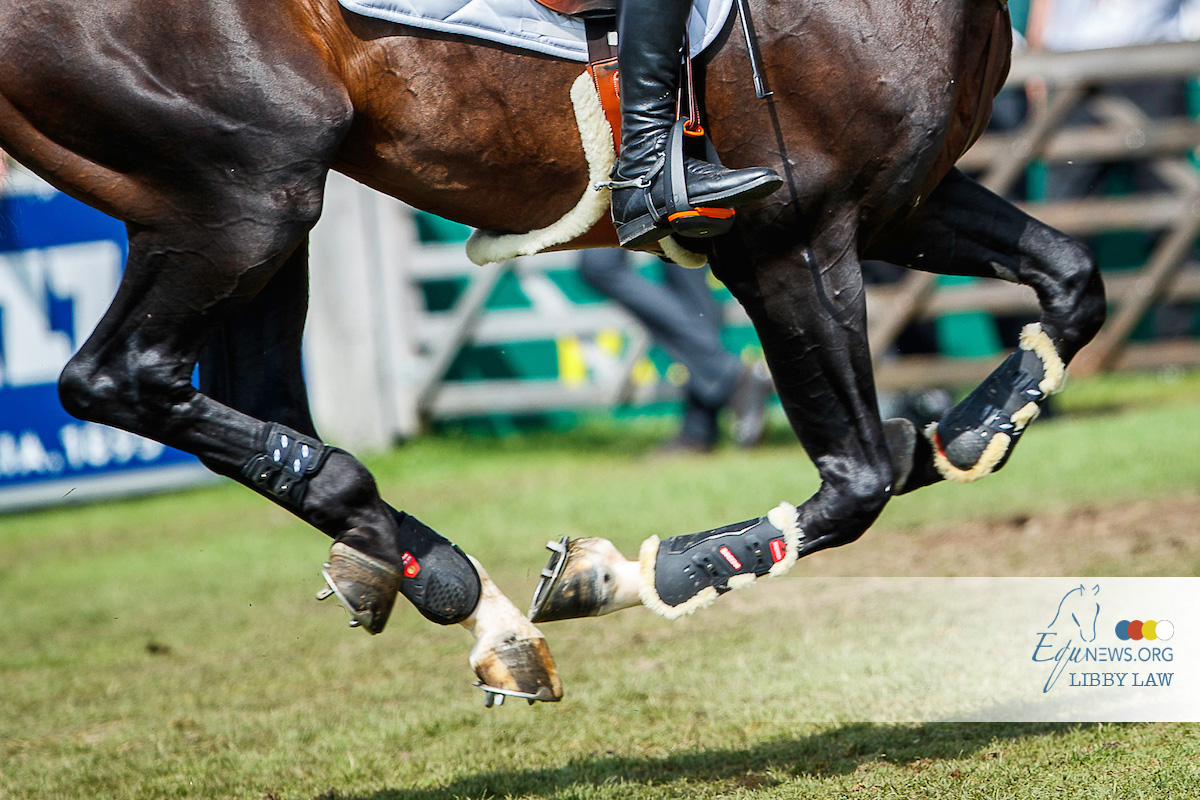 German Championships for Young Horses will take place behind closed doors
